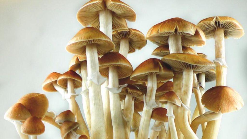 Magic Mushroom tripping in Amsterdam - Blog - Amsterdam Teleport Hotel